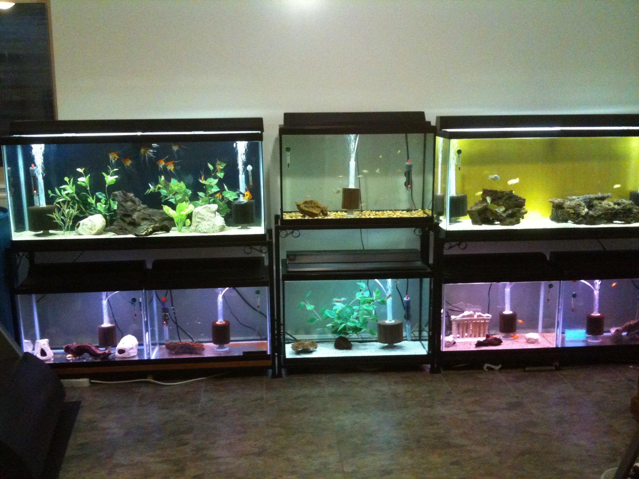 Aquarium fish tank for sale - Episode 60 Podcast Resources Page Aquarimax