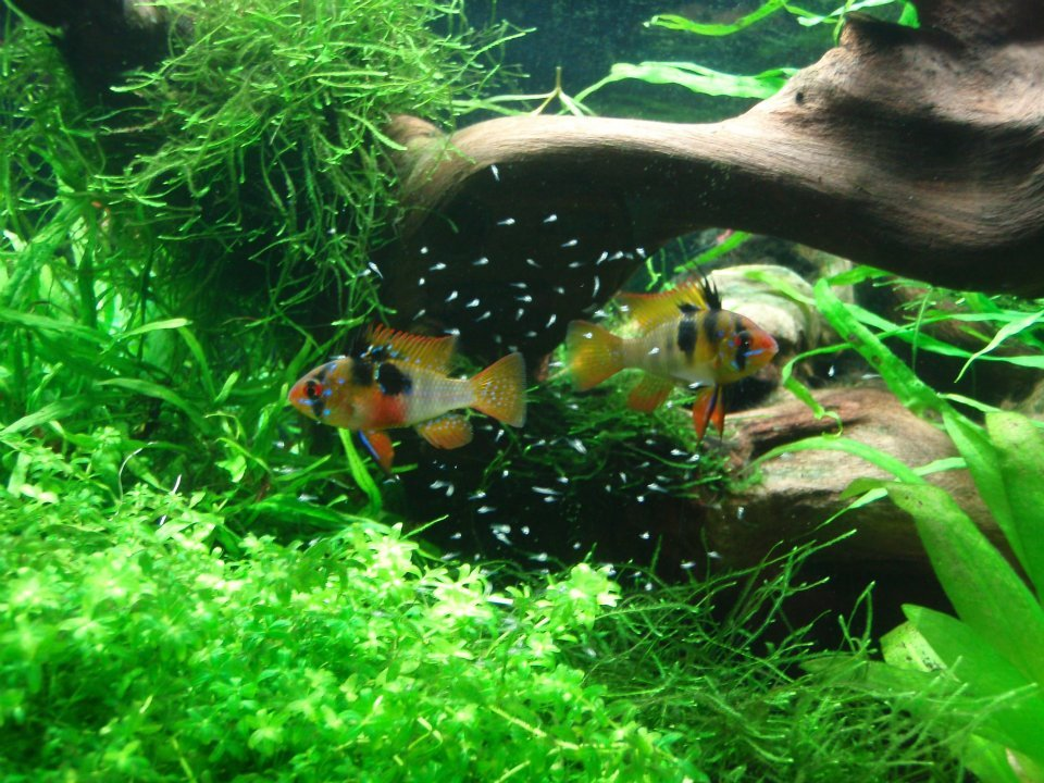 miniature frogs in plastic aquarium - Doylestown